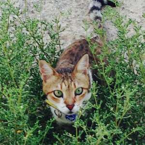 Lost: We lost our cat (Ant) on the 6th of September in Riviera del Sol. She is 15 years old and has a chip & collar with our UK phone numbers!